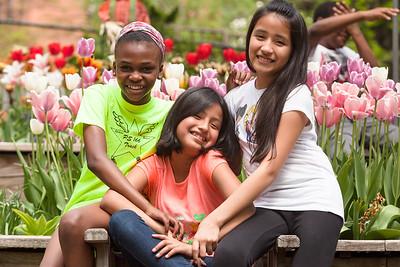 Tulip Garden Favorite may2015-7029