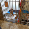 Special Education students at SDHS assist at the Greensburg Animal Shelter twice a week.