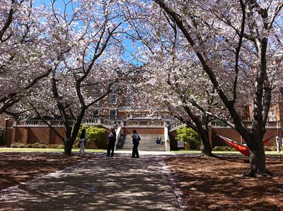 Rachael's Freshman dorm behind trees