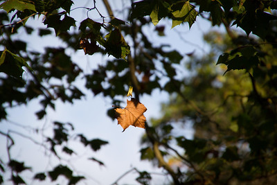 Falling leaf. Waited for 2 mintues to get the perfect position and lighting, yet still don't have it.