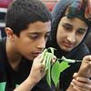 Stoklosa Middle School Summer Program. Mohammed Al Ezairej, 11, and his sister Noor Al Ezairej, 13, watch a cecropia caterpillar. (SUN/Julia Malakie)