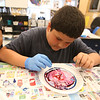 """Stoklosa Middle School Summer Program.  Chris Lozada, 11, of Lowell, uses """"Kitchen Chemistry"""", using milk, food coloring and Dawn detergent as a catalyst to make swirling designs. (SUN/Julia Malakie)"""
