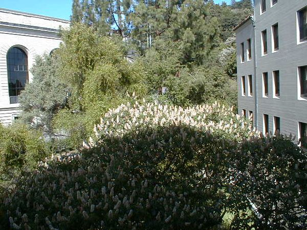 2000-06-10 room-view-01