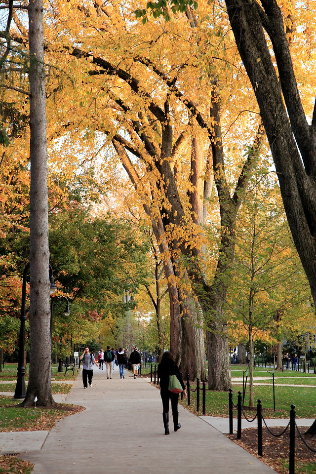 Elms in October, Penn State University campus.