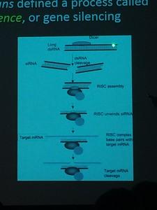RNAi gene silencing explained