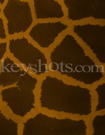 8 5x11 - Giraffe 2