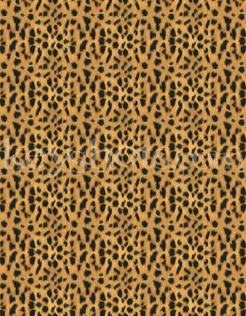 8 5x11 - Cheeta