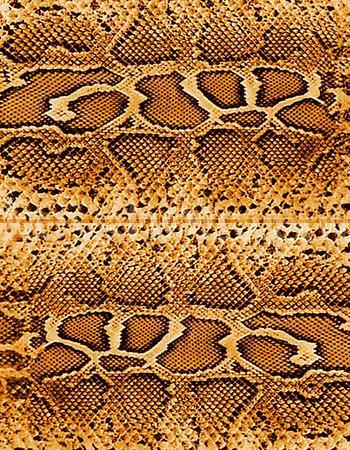 8 5x11 - Snake 2