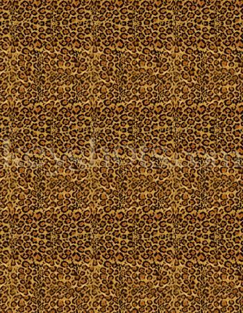 8 5x11 - Cheeta 2