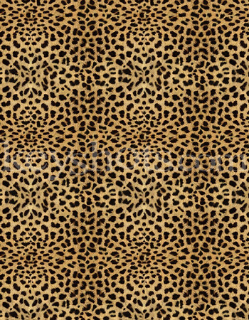 8 5x11 - Leopard Print