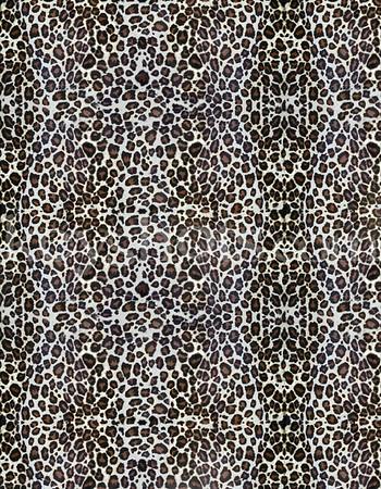 8 5x11 - Cheeta 3