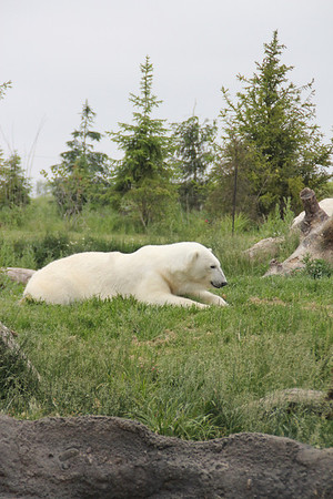 Zoo Field Trip - Kara 2012