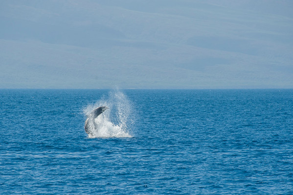 Whale Tale 2015 Whale Watching