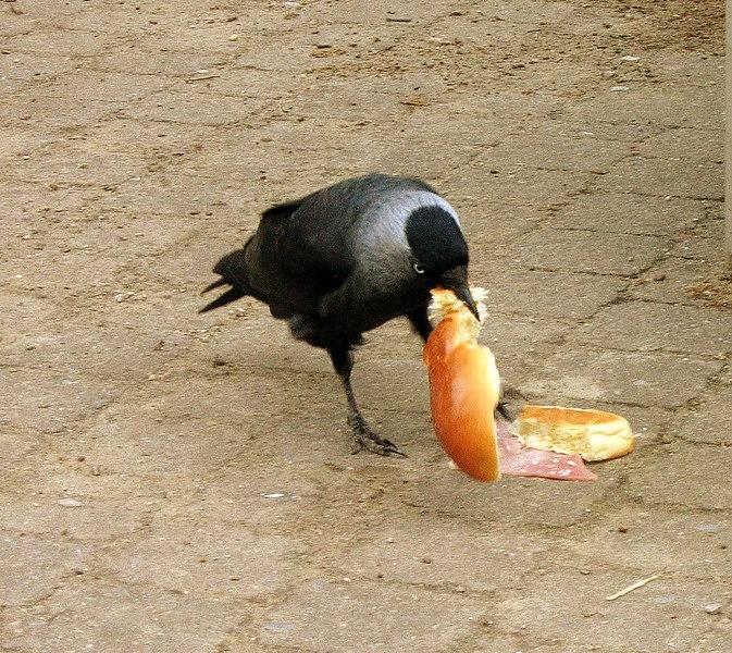 De Limburgse vogels lusten ook graag onze Olense sandwiches.