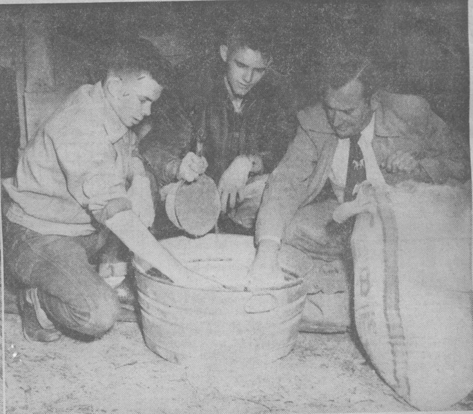 1955 Ag - Willis, Dorminy, Patton - photo appeared in Valdosta Daily Times (this is right photo)<br /> <br /> NASHVILLE, Ga., Jan. 27. – The vocational-agriculture program of Berrien High School is designed to assist students in becoming better citizens by offering practical instruction in school, home and farm problems.  At left, Walter Cooper, a student, uses a plainer in the school's new farm shop.  Looking on are H.W. Patten (left), vo-ag teacher; Fred Beverly, principal, and W.H. Outlaw, county school superintendent.  Farm visits are an important link in Berrien's vo-ag program.  In the center photograph J.H. Gordon (left), vo-ag teacher who specializes in working with young farmers, visits Irvin Jones' tobacco bed.  In the picture at right, Ronald Willis and Claude Dorminy, who are feeding steers for the Valdosta Fat Cattle Show, mix a balanced ration for their animals with the help of H.W. Patten.