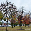 """November 11, 2015 (Veterans Day)<br /> <br /> """"FALL FOLIAGE""""  <br /> <br /> William J. Clinton Presidential Library and Museum<br />  1200 President Clinton Ave.<br />  Little Rock, AR 72201<br />  Official website: <a href=""""http://www.clintonlibrary.gov"""">http://www.clintonlibrary.gov</a>"""