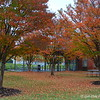 """November 11, 2015 (Veterans Day)<br /> <br /> """"FALL FOLIAGE""""<br /> <br /> William J. Clinton Presidential Library and Museum<br />  1200 President Clinton Ave.<br />  Little Rock, AR 72201<br />  Official website: <a href=""""http://www.clintonlibrary.gov"""">http://www.clintonlibrary.gov</a>"""