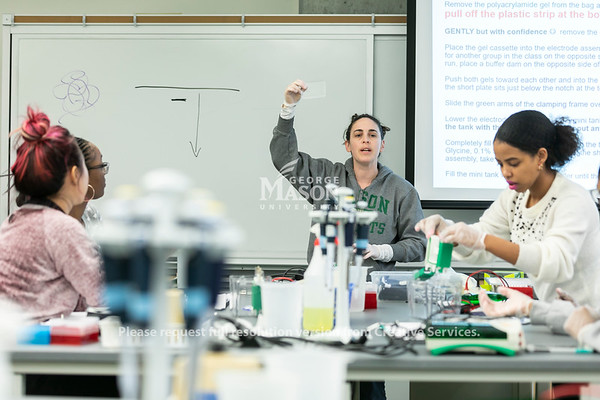 Anne Verhoeven's Biology Lab class.  Photo by:  Ron Aira/Creative Services/George Mason University