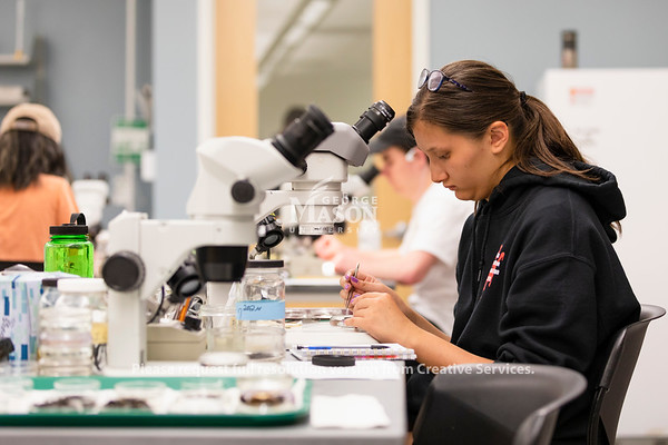 Senior Forensic Science major Alexis Orbeta sorts bugs as a part of a research project looking at carrion communities. Photo by Lathan Goumas/Strategic Communications