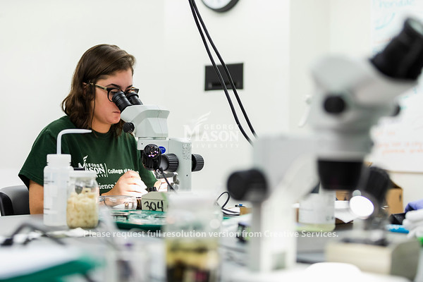 Senior Forensic Science major Angelina Mauriello sorts bugs as a part of a research project looking at carrion communities. Photo by Lathan Goumas/Strategic Communications