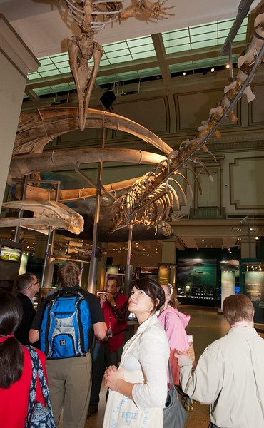 Mason LIFE Students visit the Natural History Museum in Washington DC.