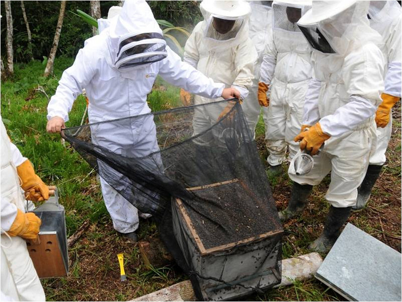 Beekeepers learning how to harvest their colonies.  Provided by German Perilla