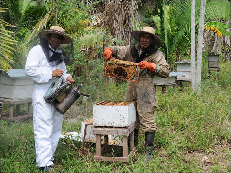 Beekeepers learning the trade.  Provided by German Perilla