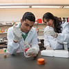 Students work  in a lab at the Krasnow Institute during the Aspiring Scientists Summer Internship Program (ASSIP) at Fairfax campus. Photo by Alexis Glenn/Creative Services/George Mason University