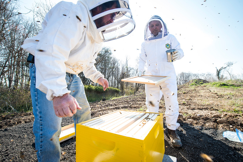Honey Bee Initiative
