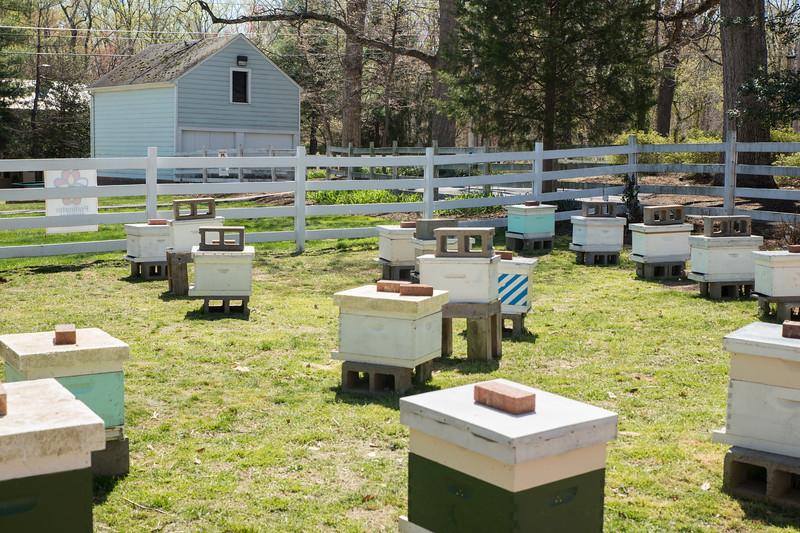 Bee Initiative apiary