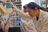 (R to L) Dongyang Yu and Taban Rasheed work in a lab at the Biomedical Research Laboratory Center Biodefense & Infectious Disease. Photo By Craig Bisacre /Creative Services/George Mason University
