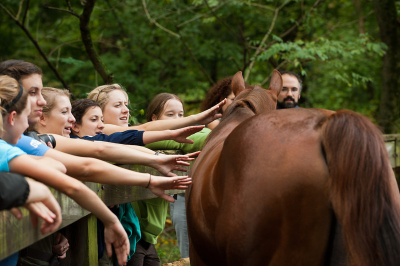 Students of the Smithsonian-Mason Semester for Conservation Studies program pet horses at the Rock Creek Park Horse Center as they participate in an urban wildlife conservation field trip to Rock Creek Park in Washington DC. Photo by Alexis Glenn/Creative Services/George Mason University