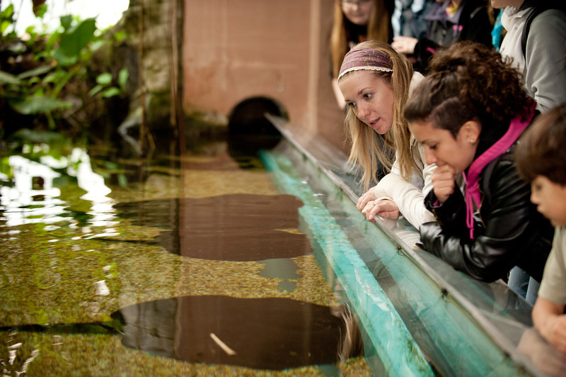 Students of the Smithsonian-Mason Semester for Conservation Studies program look at freshwater stingrays as they visit the Smithsonian National Zoological Park in Washington DC.
