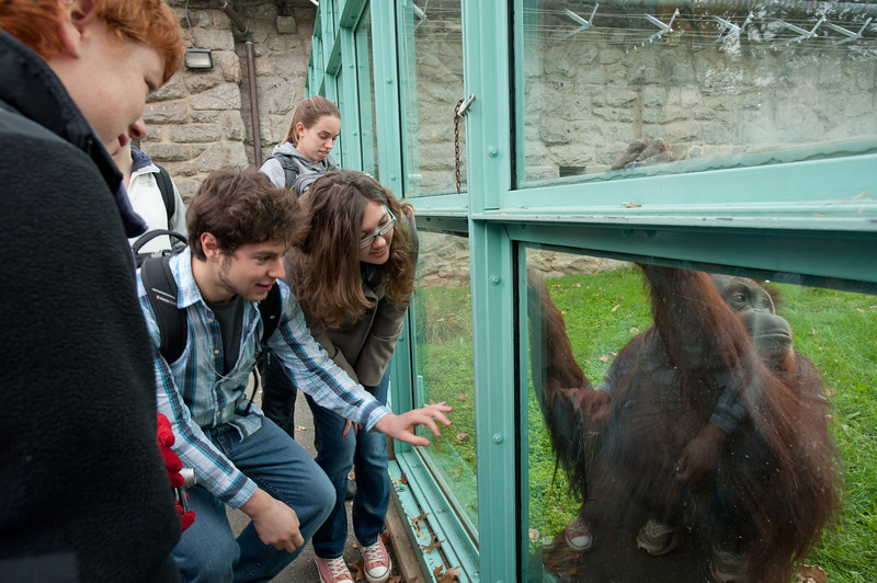 Students of the Smithsonian-Mason Semester for Conservation Studies program look at an Orangutan as they visit the Smithsonian National Zoological Park in Washington DC.