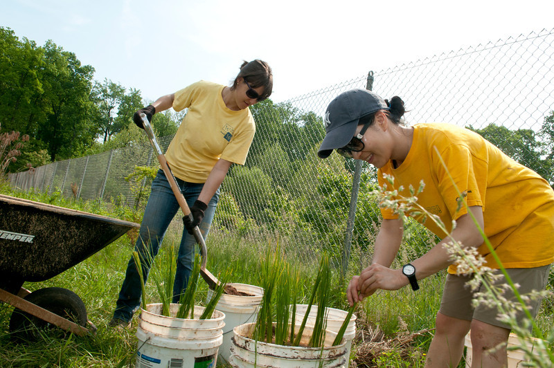 (left to right) Alicia Korol, Enviromental Science Policy graduate student, and Saebom Kim, visiting scholar, planting wetland plants.