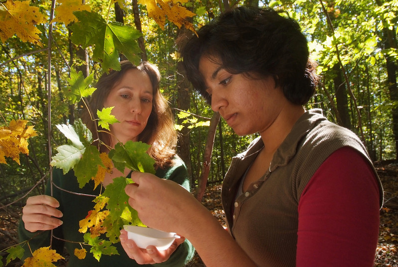Mrinalini Ramanan, Mason Scholar, and Rebecca Forkner, Environmental Science Professor, Research Leaf Changes in Hemlock Park