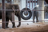 Elephants and Engineering
