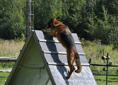 Pre-Trial Training - Aug/Sep 2013