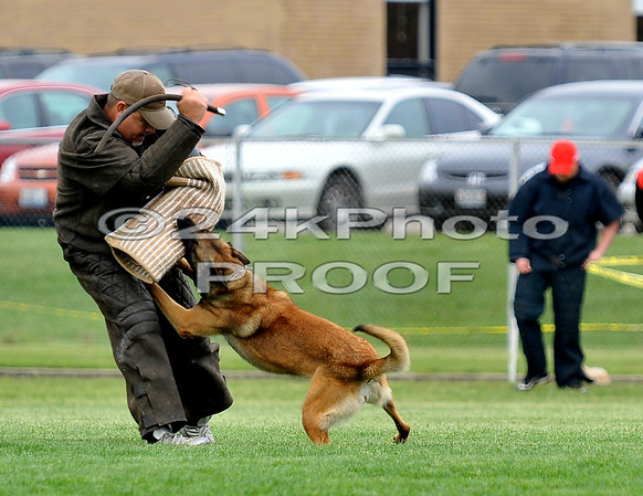 Demo-dog Nero, Malinois, owned by Ron Stokes