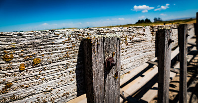 The age of this corral fence is indicated by the lichens that have taken up residence.