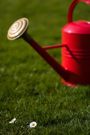 Keeping lawns watered and green will become more difficult as water becomes scarcer.