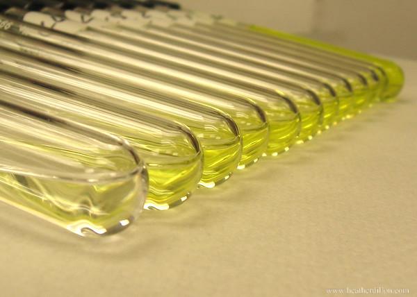 Algae samples.