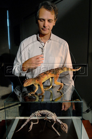 "Brazilian researcher Mario Nicoll shows a replica of ""Adamantinasu- chus navae"", a terrestrial crocodylomorph presented to journalists at Geology department of Rio de Janeiro's Federal University, Rio de Janeiro, Brazil, April. 17, 2007. The fossil was found recently in the construction site of a dam in Marilia, in the state of Sao Paulo. The new species, whose morphology is unique among terrestrail crocodylomorphs, measured 50 cms and weighed 10 Kg. It lived around 90 million years ago in the southeastern region of Brazil. (Austral Foto/Renzo Gostoli)"