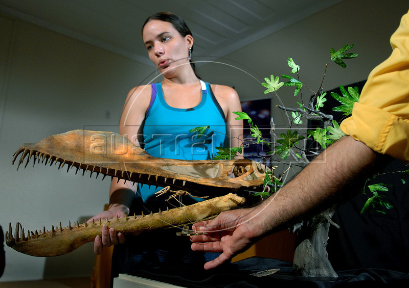 """Brazilian palaeontologists show models comparative of """"Nemicolopterus crypticus"""", a new species of tiny prehistoric flying reptile, and a other pterosaur found in Brazil, during a news conference at a National Museum in Rio de Janeiro, Brazil, Feb. 11, 2008. The toothless flying reptile lived in gingko forests that existed some 120 million years ago in present north-eastern China. With a windspan of 10 inches (250 mm), the species is one of the smallest pterosaurs known to date. (Austral Foto/Renzo Gostoli)"""