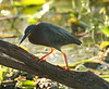birds_006