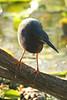 birds_007