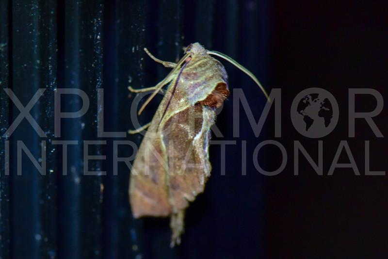 Moth - Need ID