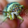 Cicada - Need ID