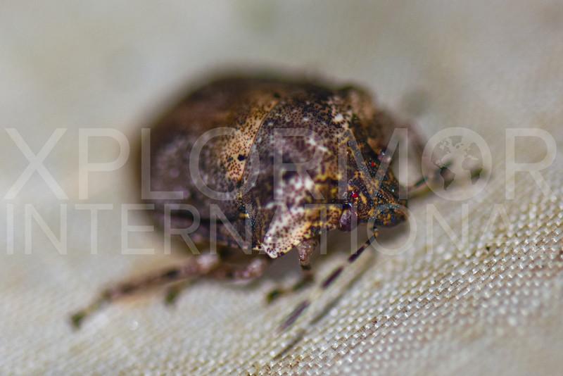 Jewel Bug - Need ID