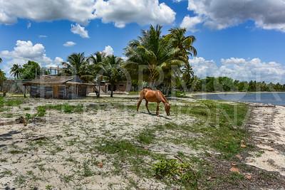 Horse Grazing on Shore